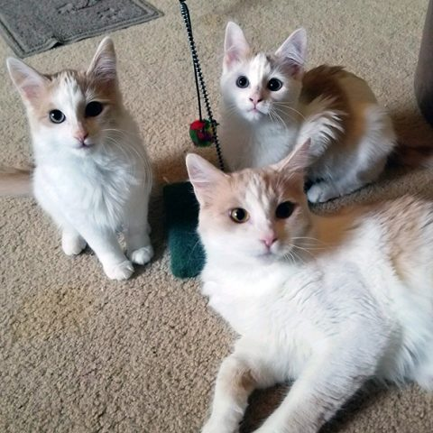 veronica and kittens